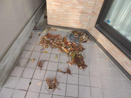 枯葉、落ち葉