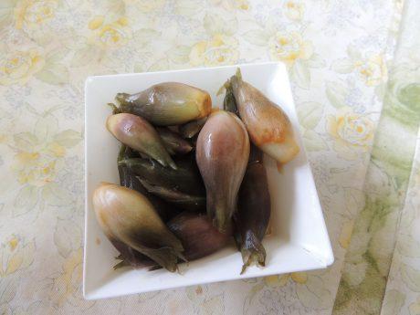 ミョウガ(2)
