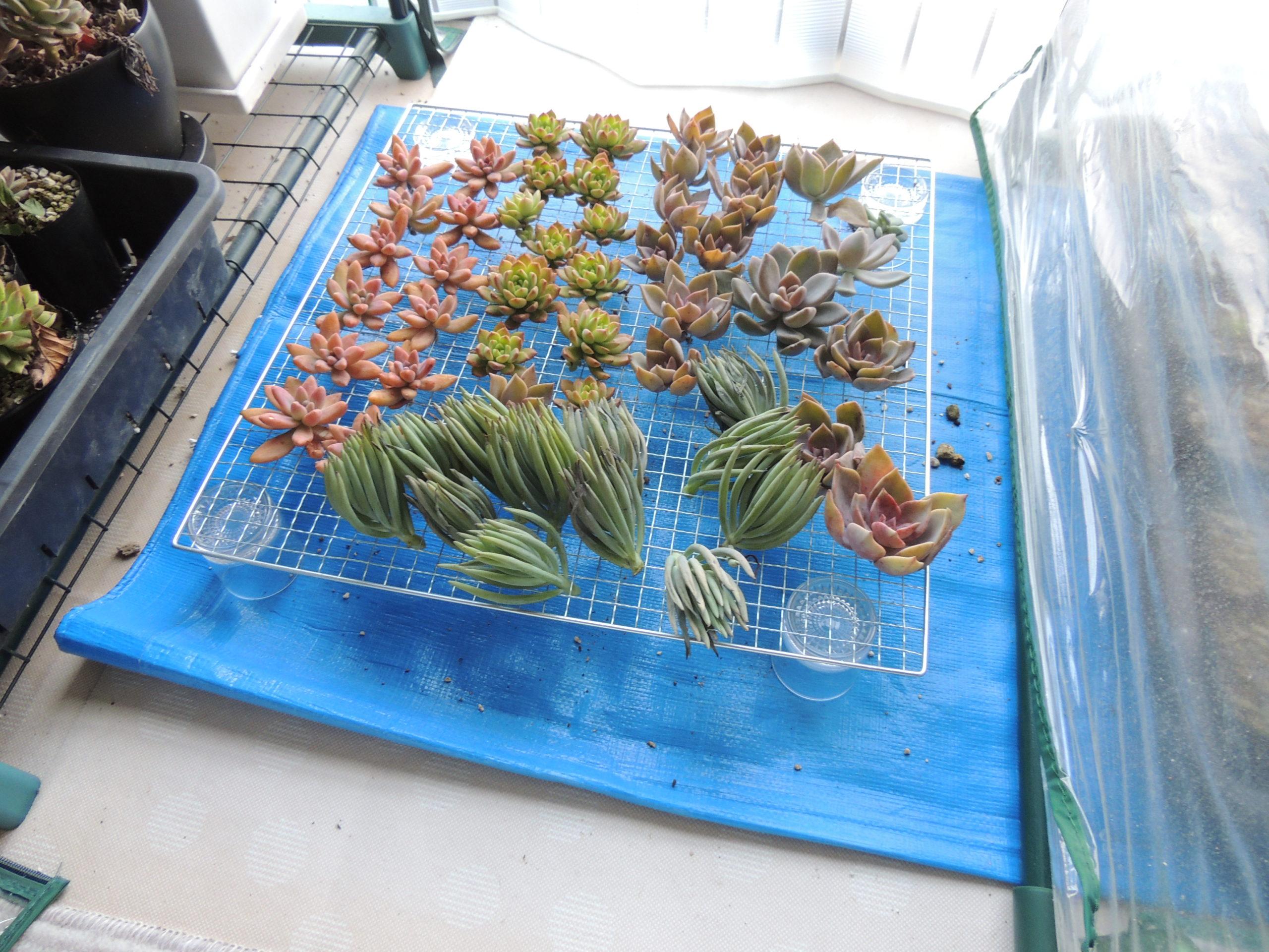 冬の茎挿し実験