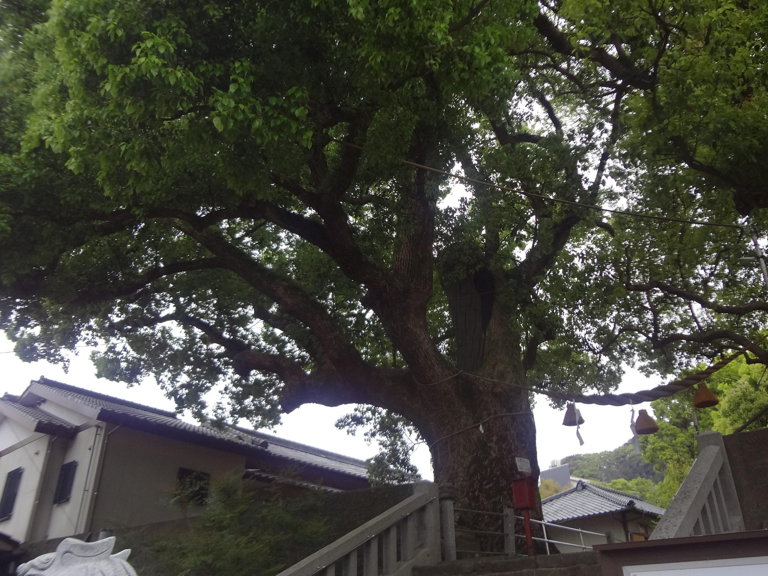 長崎散歩(2)山王神社